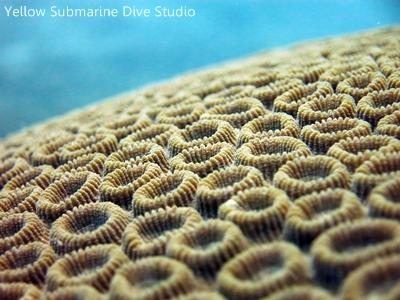 802珊瑚