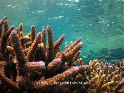 珊瑚アップ